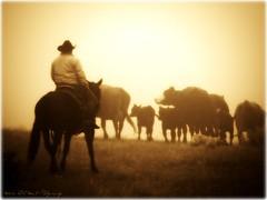 Into the Sun (wild out west) Tags: horses cowboys cows picnik ranching fotoclub supershot cowdogs topseven mywinners abigfave abigfav platinumphoto dreamscametrue youvegottalent flickraward diamondclassphotographer flickrdiamond theunforgettablepictures goldstaraward picturesworth1000words iwishidtakenthat artofimages goldenpicturesworth1000words davincimemories bestofdamniwishidtakenthat bestcapturesaoi vividstriking trailincows monochromegroupqualityaward 5damniwishidtakenthat 10damniwishidtakenthataward officialgolden5starwinnergoldenpicturesworth1000words 66artofimagesawards 10awardsflickerssuperstartalent 5dreamscametrueredstarawardsunmoon goldenblog2010