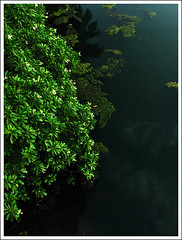 Green (Midhun Manmadhan) Tags: green kerala backwater kappil canonpowershots3is