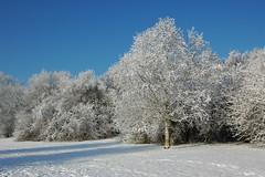 DSC_0007 (dolls_are_fun) Tags: winter netherlands sneeuw nederland lelystad winterwonderland januari2010 bultpark