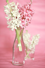 White and pink (Call me cupcake) Tags: pink flowers white flower hyacinth