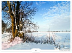 Neutral Winter (Gert van Duinen) Tags: trees winter white snow ice clouds germany landscape digitalart pasture landschaft landschap emsland dutchartist landschaftsaufnahme gertvanduinen explore77on20100104