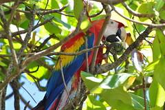 Parc Corcovado, secteur La Leona,   avant l'entrée du parc