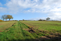 DSC_0312 (Edward and Caroline) Tags: autumn walk norton chipping