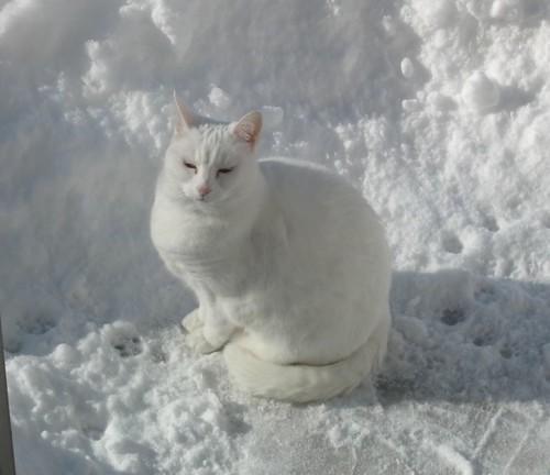 snowballsnow2