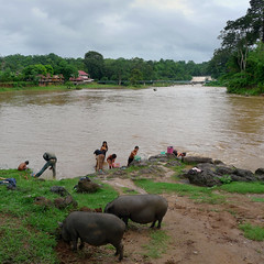 A glimpse of Laos rural life (B℮n) Tags: fishermen dailylife route20 tms simplelife drinkingwater childrenplaying bigpig fatpig tellmeastory washinglaundry bolavenplateau localfishing shallowwaters salavanprovince washingvegetables localsfishing hugepig indigenouslife lifeinthejungle tadlowaterfall sexetriver villageofkiengthanlei freshclimate sexetriverlife soondecimatedbydams sowsforfoodpurpose waterbuffalosquenchingtheirthirst villagekiengthanlei xetedriver ruralriverlife thesexetriverislifelineofruralcommunities menandwomenwashingintheriver thebatteryofsoutheastasia washingandbathing aglimpseoflaosrurallife