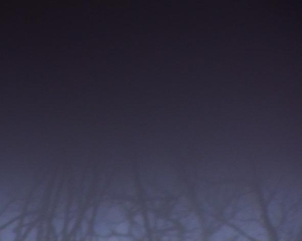 die_Nacht_ist_von_Dornen_erhellt_3_Bats_and_Swallows