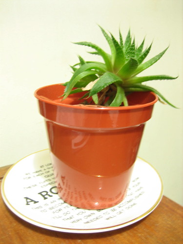 Photo Aloe Vera