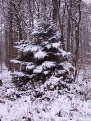 Im Wildenloh (feuermelder2009) Tags: winter 2010 ammerland wildenloh