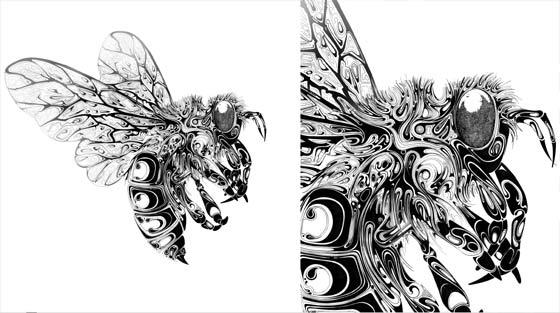 dibujos de insectos