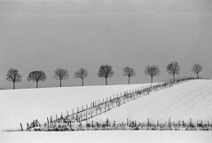 Winter field (Sven T.) Tags: schnee trees winter blackandwhite bw snow film field analog 35mm canon germany deutschland feld sw 135 schwarzweiss tyskland bume baum eos1 rhs asa800 fujineopan1600 schwarzweis kreisunna amalocoam74 ef702004lusm districtunna konicaminoltadimagescaneliteii frndenberganderruhr rolleihighspeed