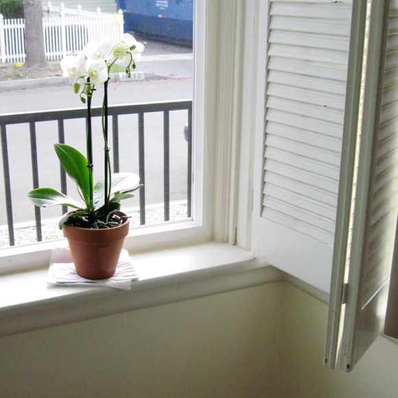 orchid-in-window