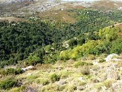Sentier du ruisseau de San Petru : les bergeries d'A Finosa