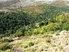 Sentier du ruisseau de San Petru : la bergerie d'A Finosa