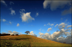 If... (angus clyne) Tags: world blue trees winter england sky white tree grass clouds one oak ancient day alone branch little path walk bare magic hill dream fluffy cider somerset dreaming every filter lee only lone lonely scrumpy filters mound scape magical flikcr burrow burrowhill colorphotoaward