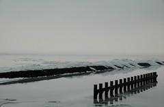 """Oostvaardersdijk 040210. Zelfde plek als zondag, alleen somberder. Het """"grote werk"""" in Friesland hebben we niet gezien. (rspeur) Tags: winter thenetherlands lelystad oostvaardersdijk"""