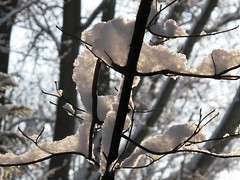 backlit snow - morning light (karma (Karen)) Tags: winter light snow home shadows maryland baltimore magichour