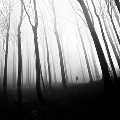 Ghost Of Perdition (Midnight - digital) Tags: wood trees bw music white mist
