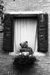 Orsetto (Valt3r Rav3ra - DEVOted!) Tags: bw film 35mm toys finestra venezia ilford orso nikonf90x analogico valt3r