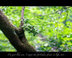 I have always found that mercy bears richer fruits than strict justice. (☆Mi☺Λmor☆) Tags: life travel copyright india tree green expedition fruit youth forest trekking trek canon spectacular landscape photography hostel scenery mine hiking explorer goa like forbidden exotic national danny usm dslr picturesque mercy maximus confession dinesh beautifulscenery kumar yhai 40d primeart ☆mi☺λmor☆ sidnid anjaanasafar primefineart dannymaximus fotocrafter dmaximus anjaanarahi