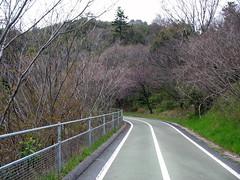 2516 Ascending to the Bridge (mari-ten) Tags: nature japan cycling hiroshima walkway  2008 onomichi eastasia shimanami    18  200804 20080402 seishun18travel mukaiisland