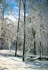 Winter relaxation (alan shapiro photography) Tags: trees winter sky snow yard backyard exploring hammock canonrebel wandering 2010 roaming alanshapiro momentsoftruth backyardafterthesnowstorm ashapiro515 canonrebelt1i hammockinsnow snowcoveredhammock ©2010alanshapiro alanshapirophotography wwwalanwshapiroblogspotcom ©2010alanshapirophotography