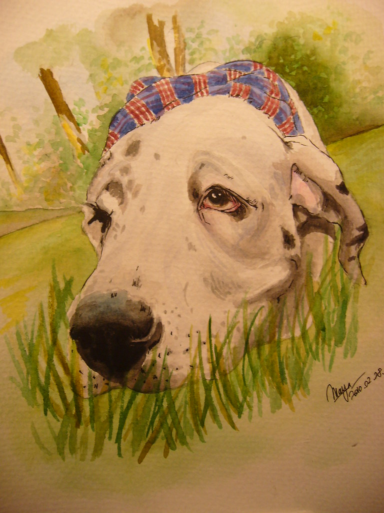Dog portrait, great Dane