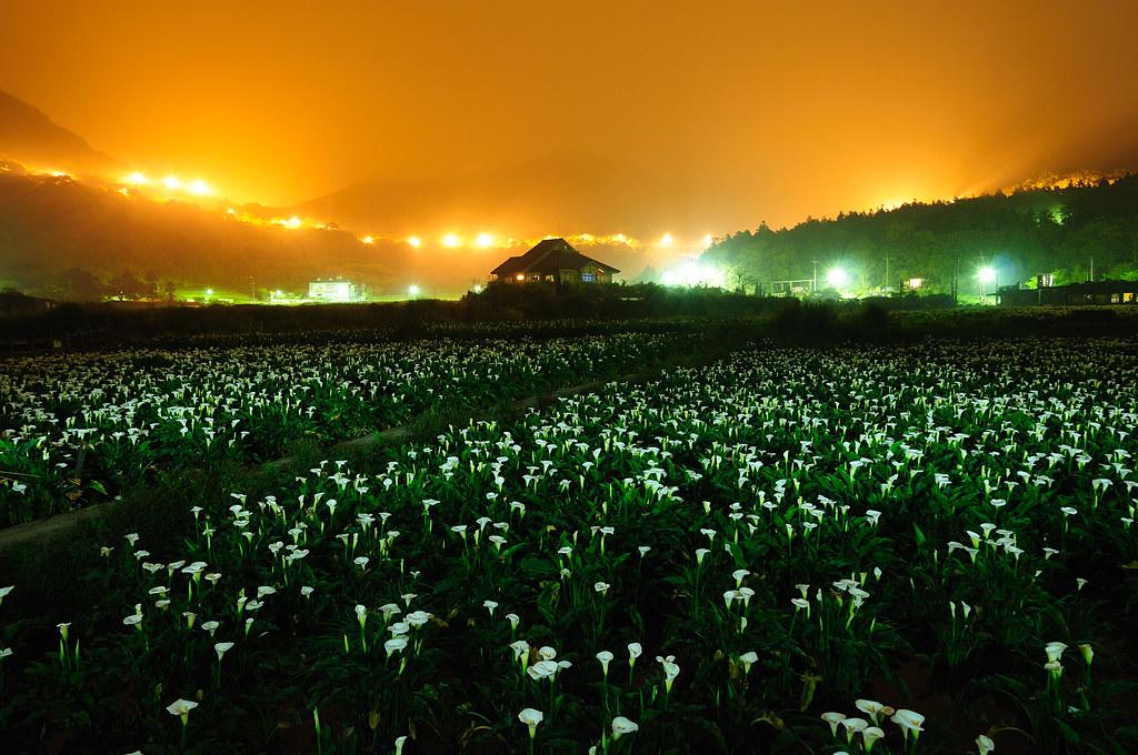竹子湖 凌晨四點半