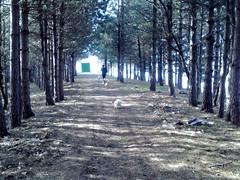07032010097 (alexpicc) Tags: tra passeggiata vorno boschi