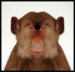 THE IT (LitterART) Tags: man eye strange animal monster whistler zoo weird alien creepy spooky ape creature auge whistle platypus observed tier kreatur mensch observer schnabeltier pfeifer zyklop cyclope beeing pfeifen geschpf