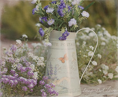 Country flowers... (ImagesByClaire) Tags: garden dof depthoffield textures wildflowers pitcher 50mmf14 purpleandwhite sweetalyssum project365 explored florabella countryflowers skeletalmess
