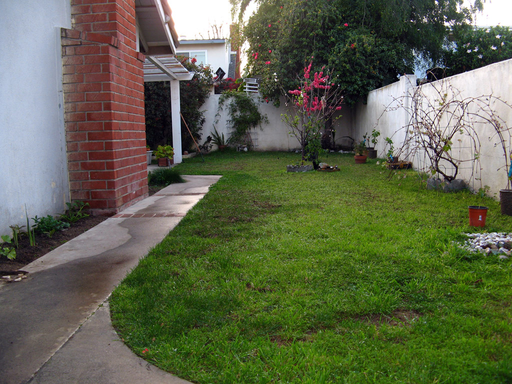fruit trees backyard home design inspirations