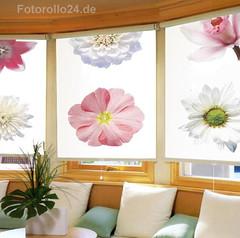 FotoRollo Flower (Fotorollo24.de) Tags: Design Innenarchitektur  Raumgestaltung Lifestyle Blumen Jalousie Rollo