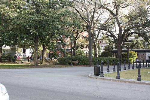 Savannah 011