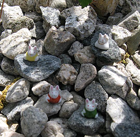 little bunnies on rocks -1
