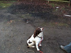 """The Pooch from Derby • <a style=""""font-size:0.8em;"""" href=""""http://www.flickr.com/photos/8971233@N06/4487438652/"""" target=""""_blank"""">View on Flickr</a>"""