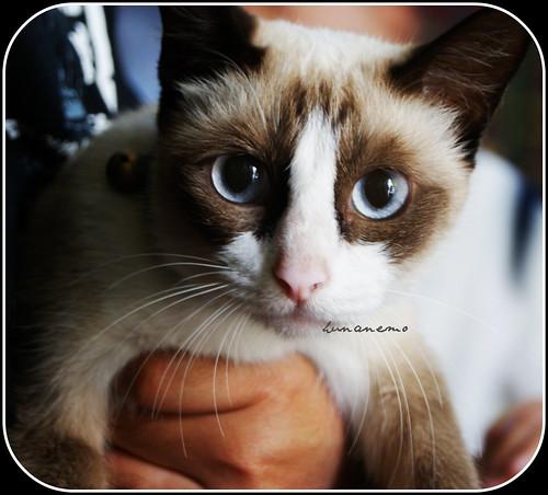 hello ! saya Chiky ;)