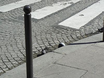 bain de pigeons.jpg