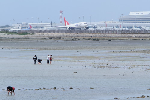 JAL's B777-300 with the people gather shellfish at low tide