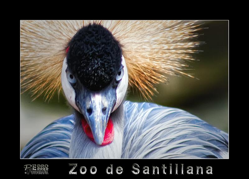 Grulla - Zoo de Santillana del Mar