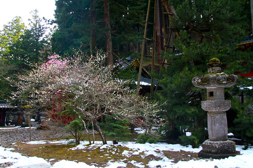 Nikko - Primavera con nieve