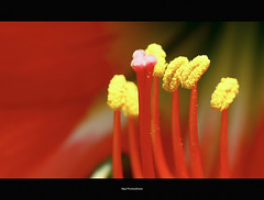 League of extraordinary gentlemen.. (Vijay..) Tags: vijay flower macro nature canon lens 50mm prime zoom bokeh telephoto handheld xsi 232 raynox explored dcr150 leagueofextraordinarygentlemen 450d phulwadhawa