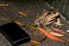 (Dada's life) Tags: frog