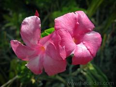 Flores / Flowers