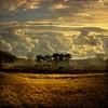 Simplicity is the ultimate sophistication.  ~Leonardo DaVinci (genevieve van doren) Tags: trees light sky grass clouds coast sand belgium belgique belgie lumière dunes sable textures ciel arbres cote nuages hdr herbes lezoute bratanesque