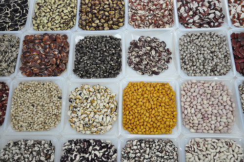 Bean Diversity at CIAT