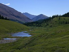 """Mountain meadow at Warner Guiding and Outfitting (Ranchseeker (www.ranchseeker.com)) Tags: other hiking alberta banff """"flyfishing"""" """"cowboycookouts"""" """"horsebackriding"""" """"naturetrails"""" """"overnighthorsetrips"""" """"packtrips"""" """"saddleyourownhorse"""" """"wildernesssetting"""" """"mountainsetting"""" """"photographytrips"""" """"wildlifeviewing"""" """"crosscountryskiing"""" """"sleighrides"""" """"snowshoeing"""""""