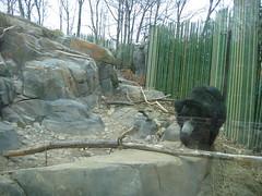 IMG_0883 (superdubey) Tags: zoo dc washington national dc08
