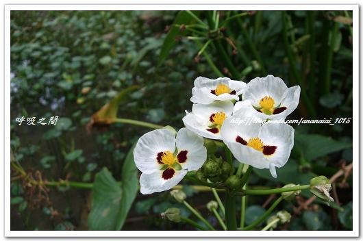 生態園之花
