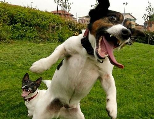 Crazy Animals Funny Shoots Fun  D E D Bc D Be D  Crazy Animal