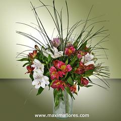 ramo_flores_alstroemeria_salvaje (MaximaFlores.com) Tags: flores ramo blancas lilas alstroemerias moradas hierbadeoso